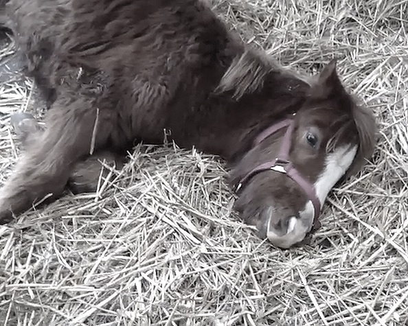Shrimpy rescued by Help for Horses UK charity