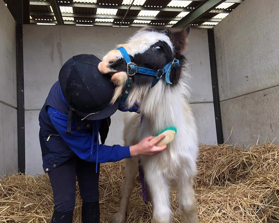 Squeak enjoying being groomed at Help for Horses UK charity