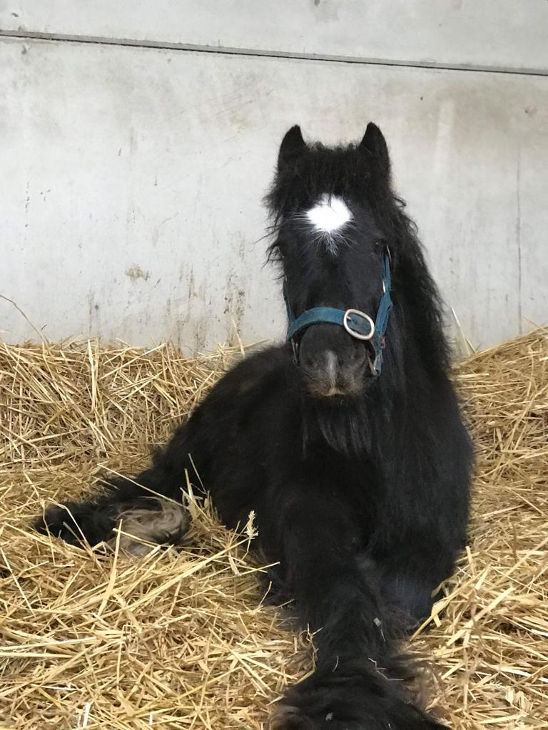 Bubble rescued by Help for Horses UK charity