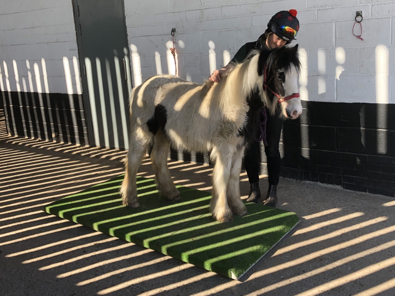 Sprout being weighed at Help for Horses UK