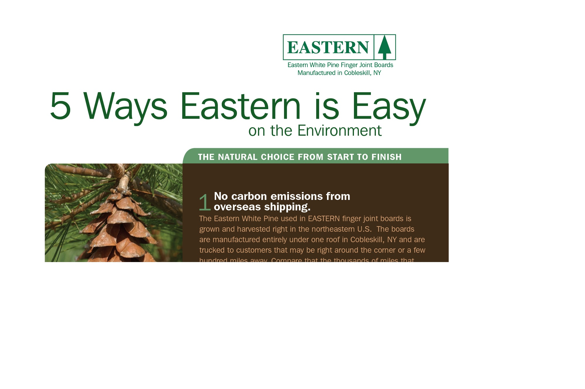 Eastern White Pine sample flyer.jpg
