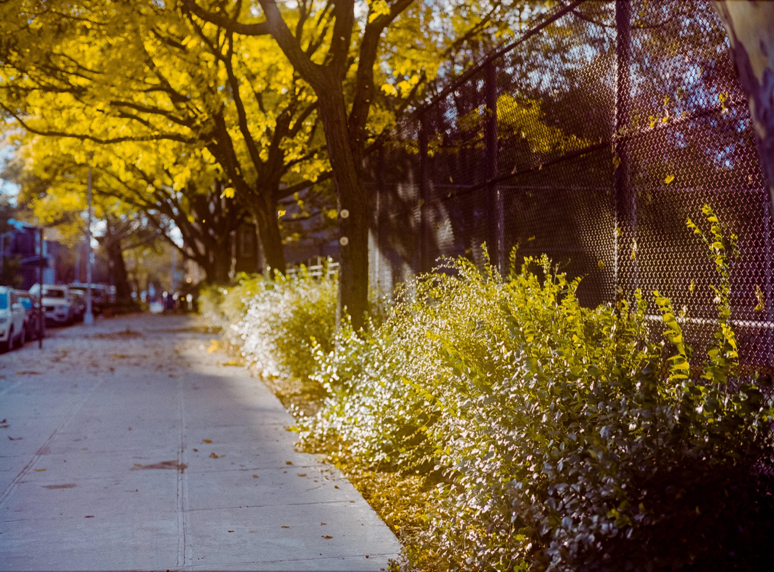 Medium Format | Ektar 100 | Brooklyn, NY