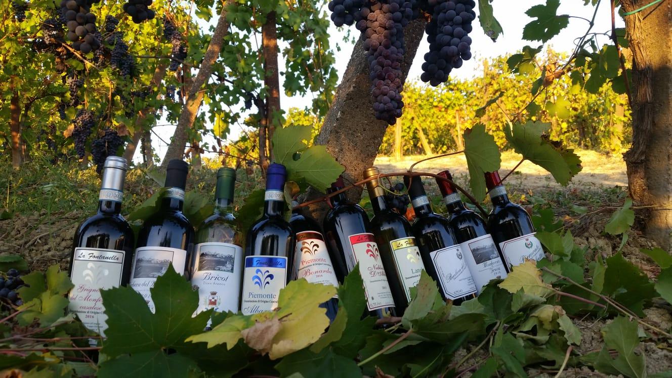 Az. Agricola Coppo Giovanni bottiglie.JPG