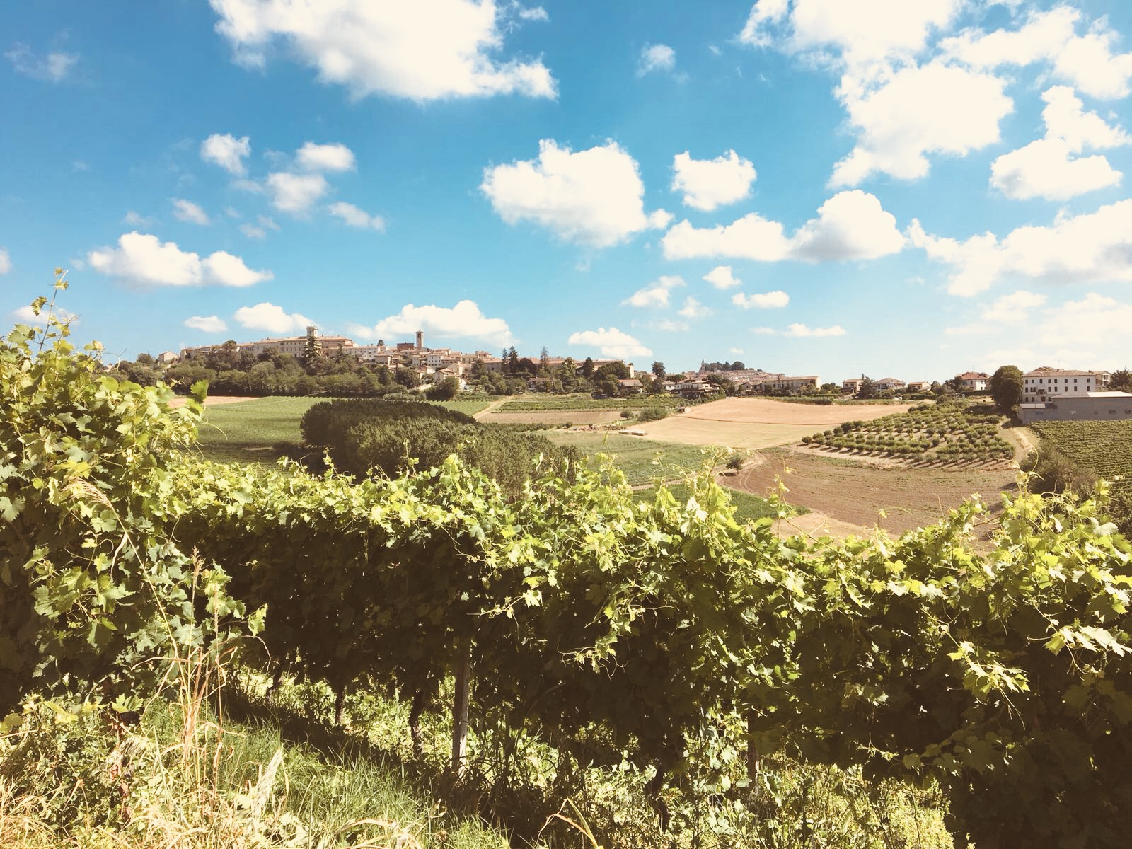 Monferrato Estate.jpg