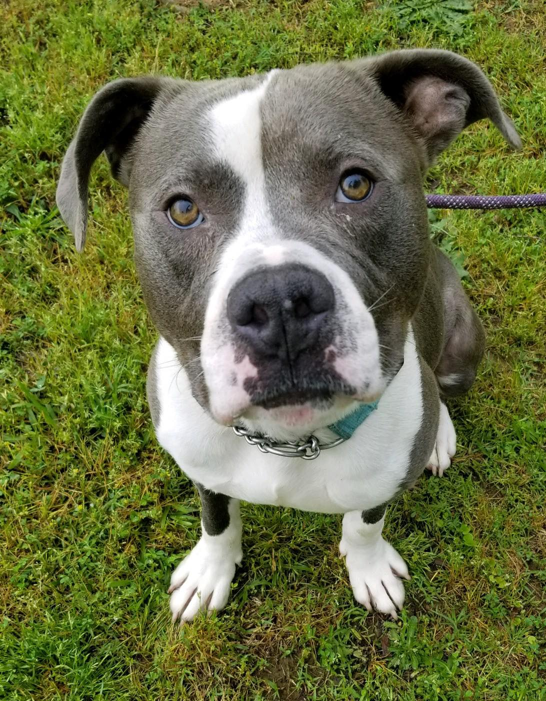 Ready to make a difference? - KC Bully Rescue is always looking for help, keep reading for options!