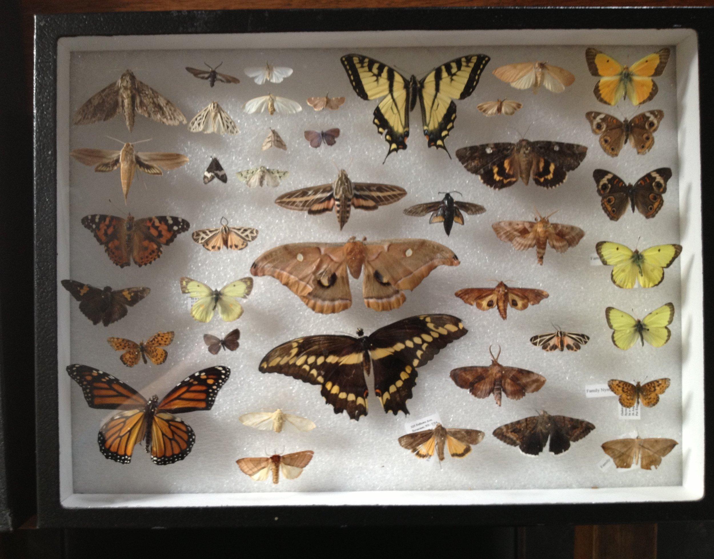butterfly mounts