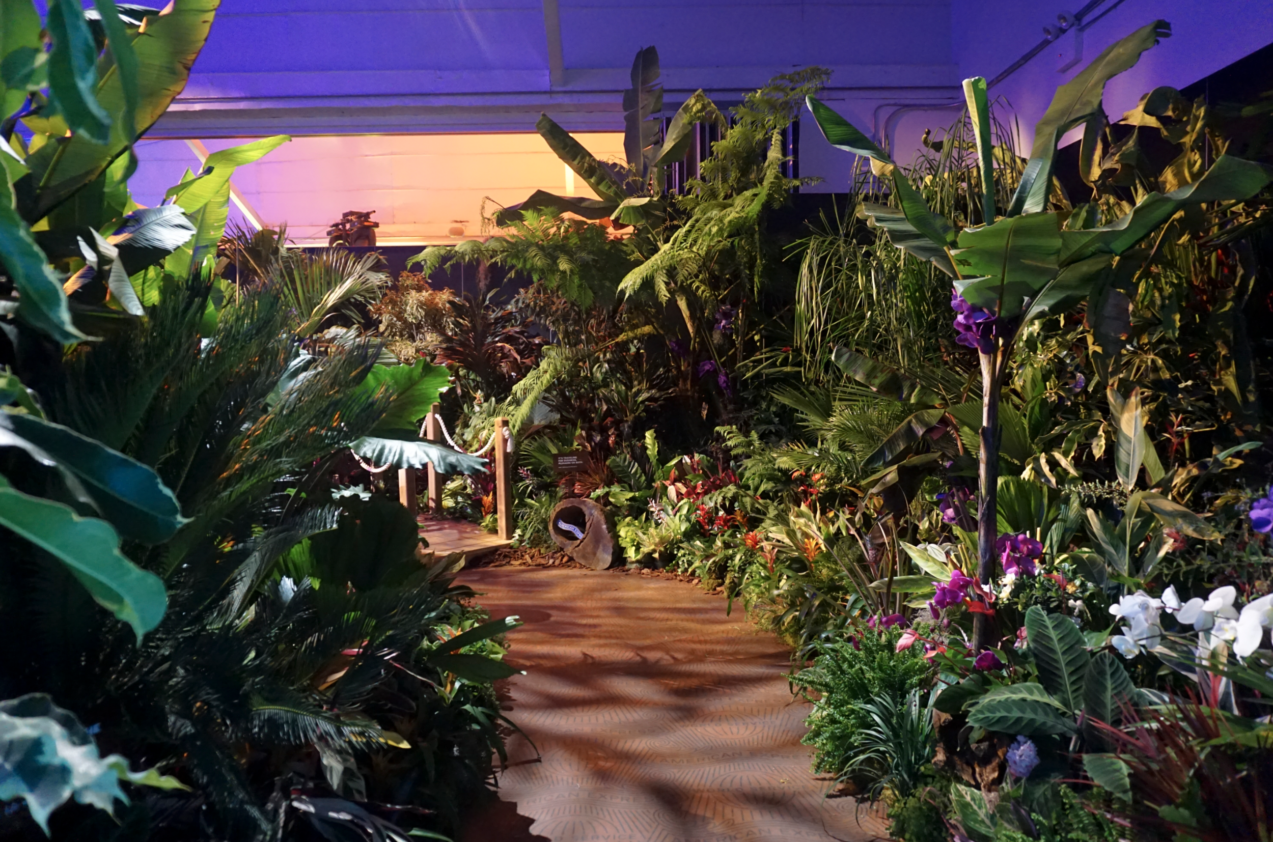 The tropical rain forest room where guests were encouraged to meditate in a fomo-worthy environment