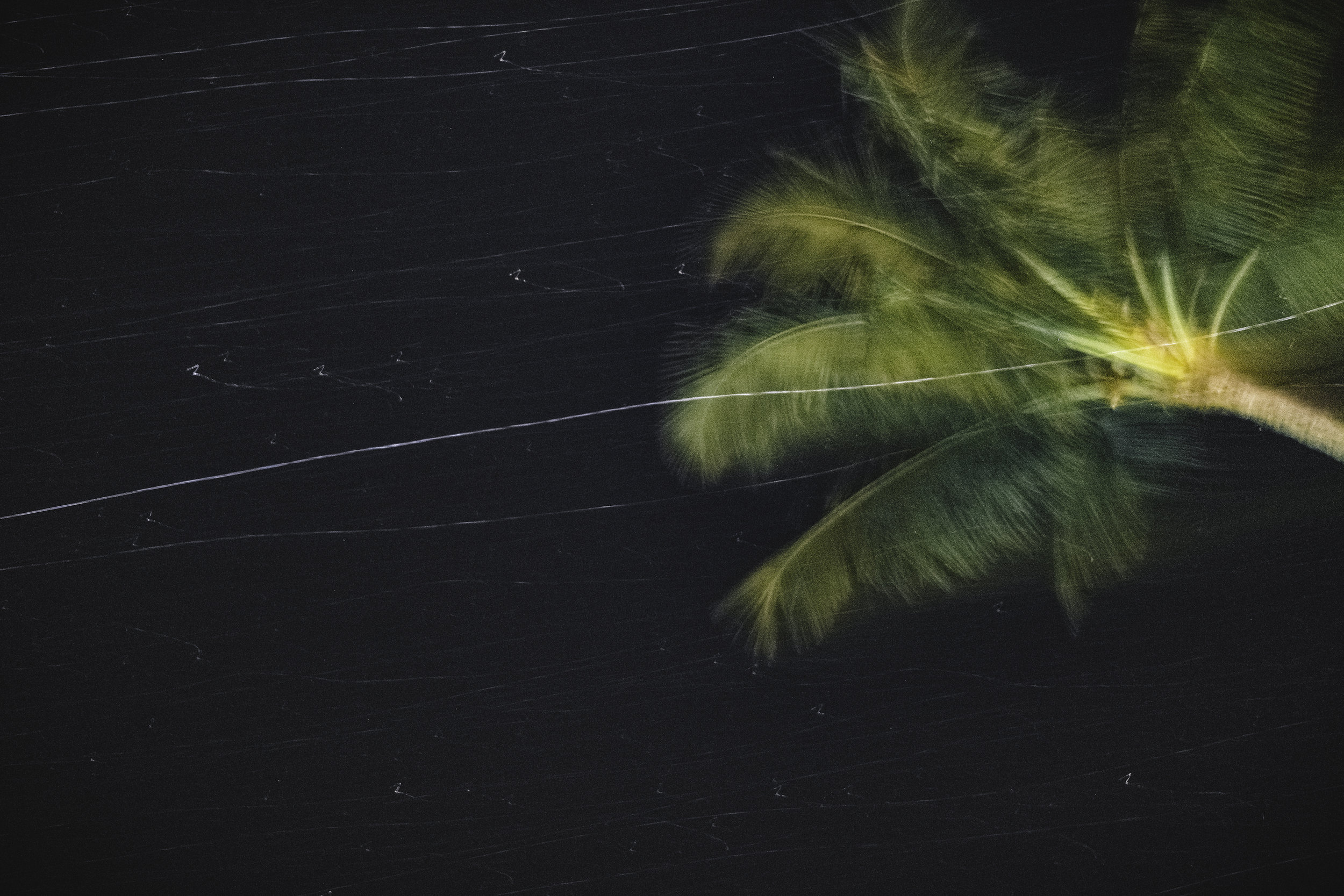 Palm Tree spinning-web.jpg