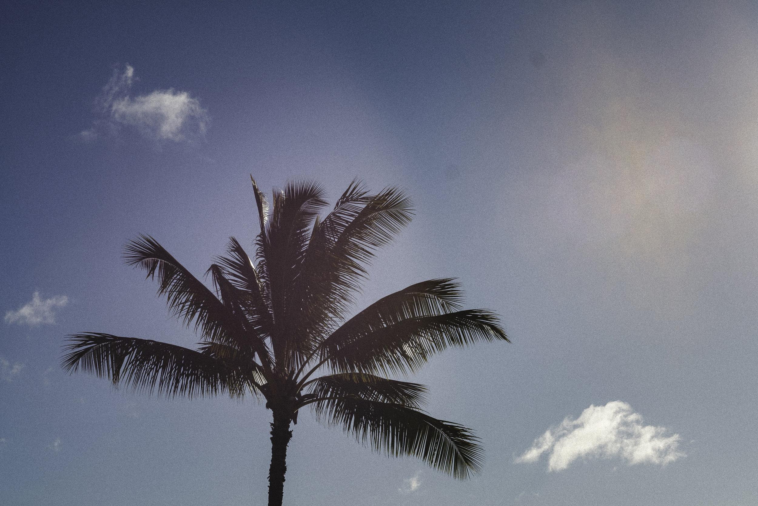 Palm1_-web.jpg