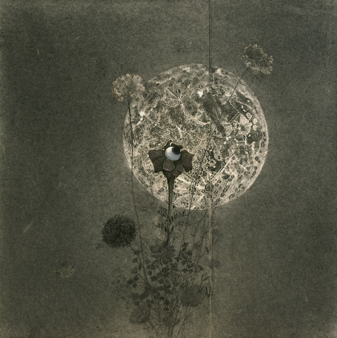 Moonflower, 2004, Charcoal, graphite, oil, ink and xerox transfer on paper laid on canvas, 24 x 24 inches. Private Collection Los Angeles.