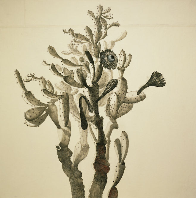 Cactus, 2004, Ink, graphite, watercolor, oil, xerox transfer on paper laid on canvas, 44 x 44 inches. Private Collection Florida.