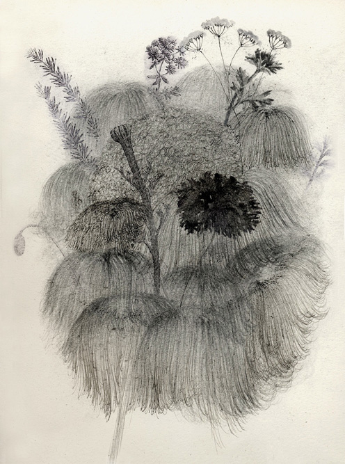 Heads with Plants, 2003 Charcoal, ink and xerox transfer on paper, 15 x 11 inches