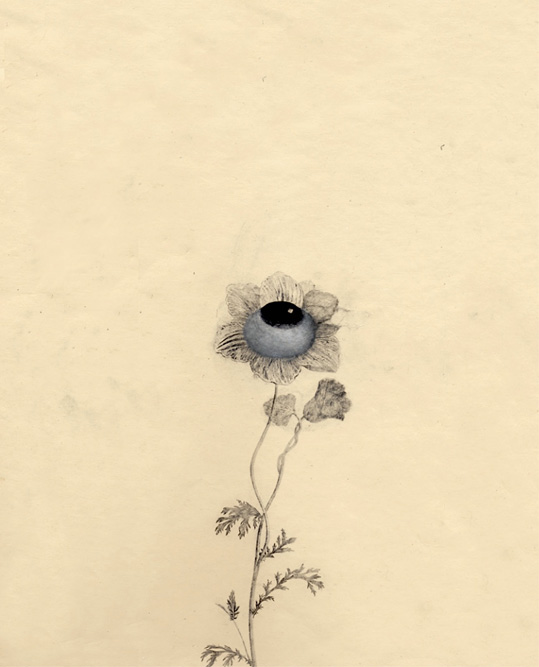 Small Wildflower, 2001 Charcoal, graphite and xerox transfer on paper, 11 1/4 x 8 3/4 inches