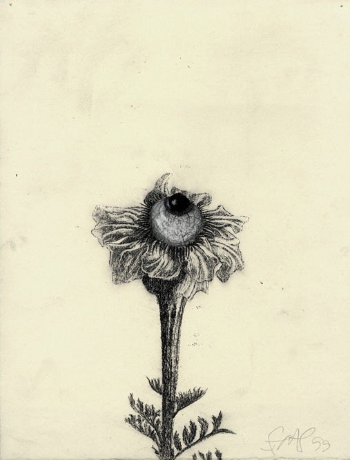 Small Wildflower II, 2000 Charcoal, graphite and xerox transfer on paper, 11 1/4 x 8 3/4 inches