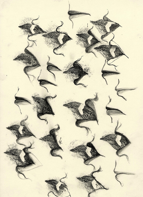 Bird in Mouth, 1999 Graphite and xerox transfer on paper, 13 x 10 inches