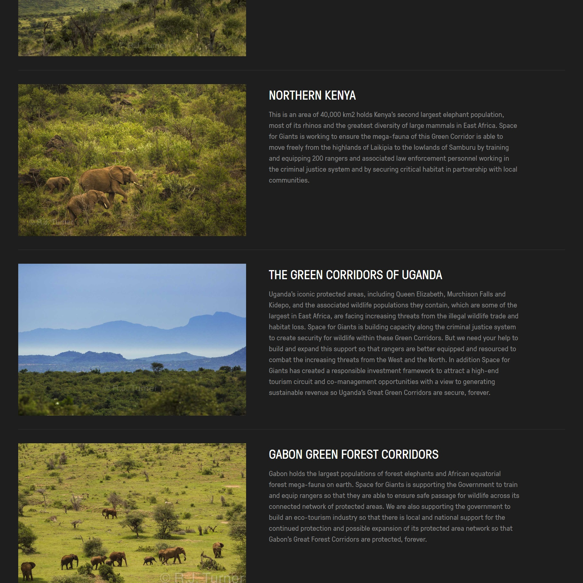 copywriting+for+conservation