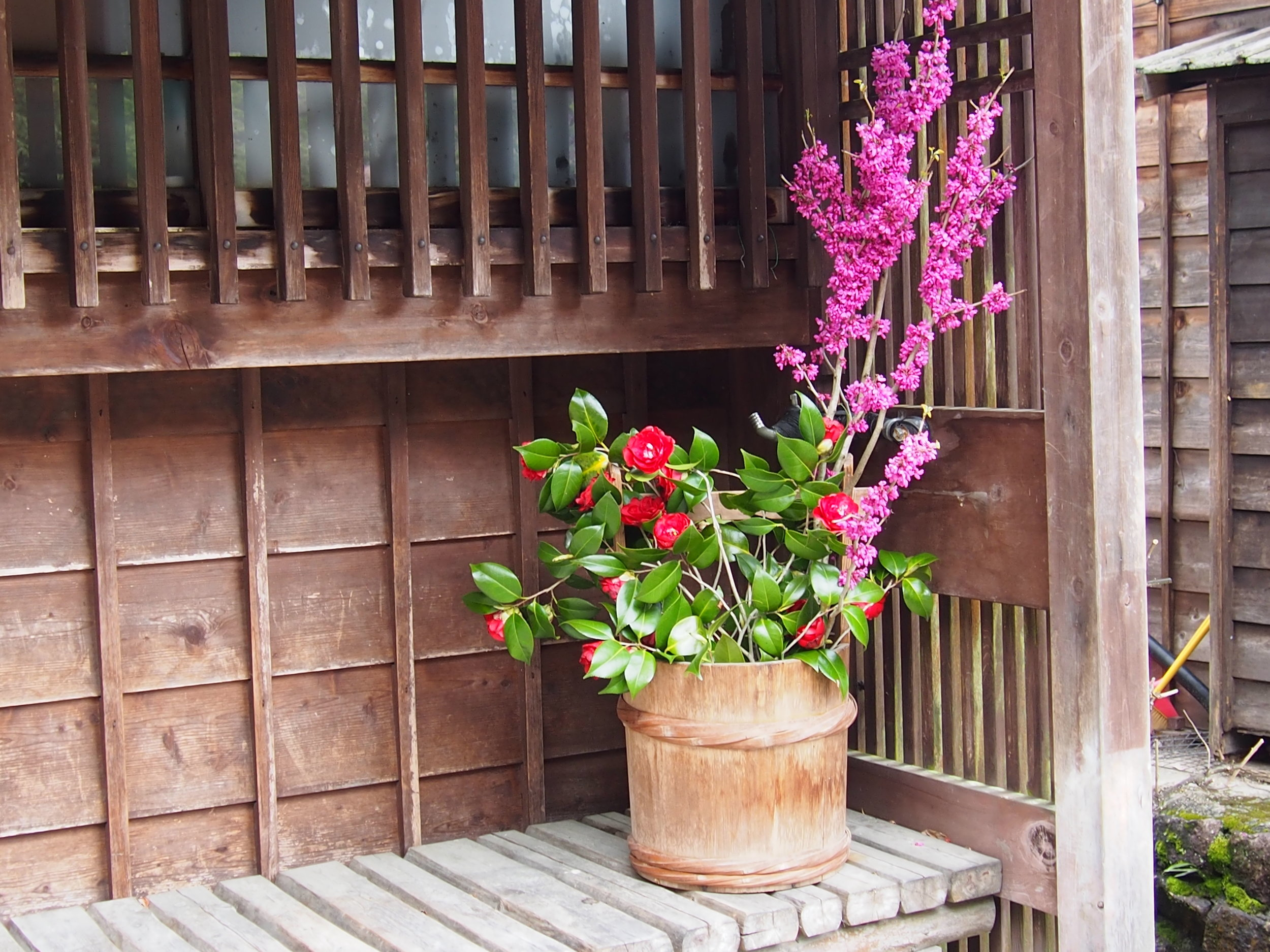 Beautiful natural flowers in Tsumago Juku (Gifu prefecture)