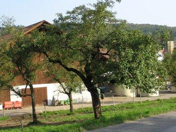 Der Weiherhof aus Sicht der Hauptstrasse -
