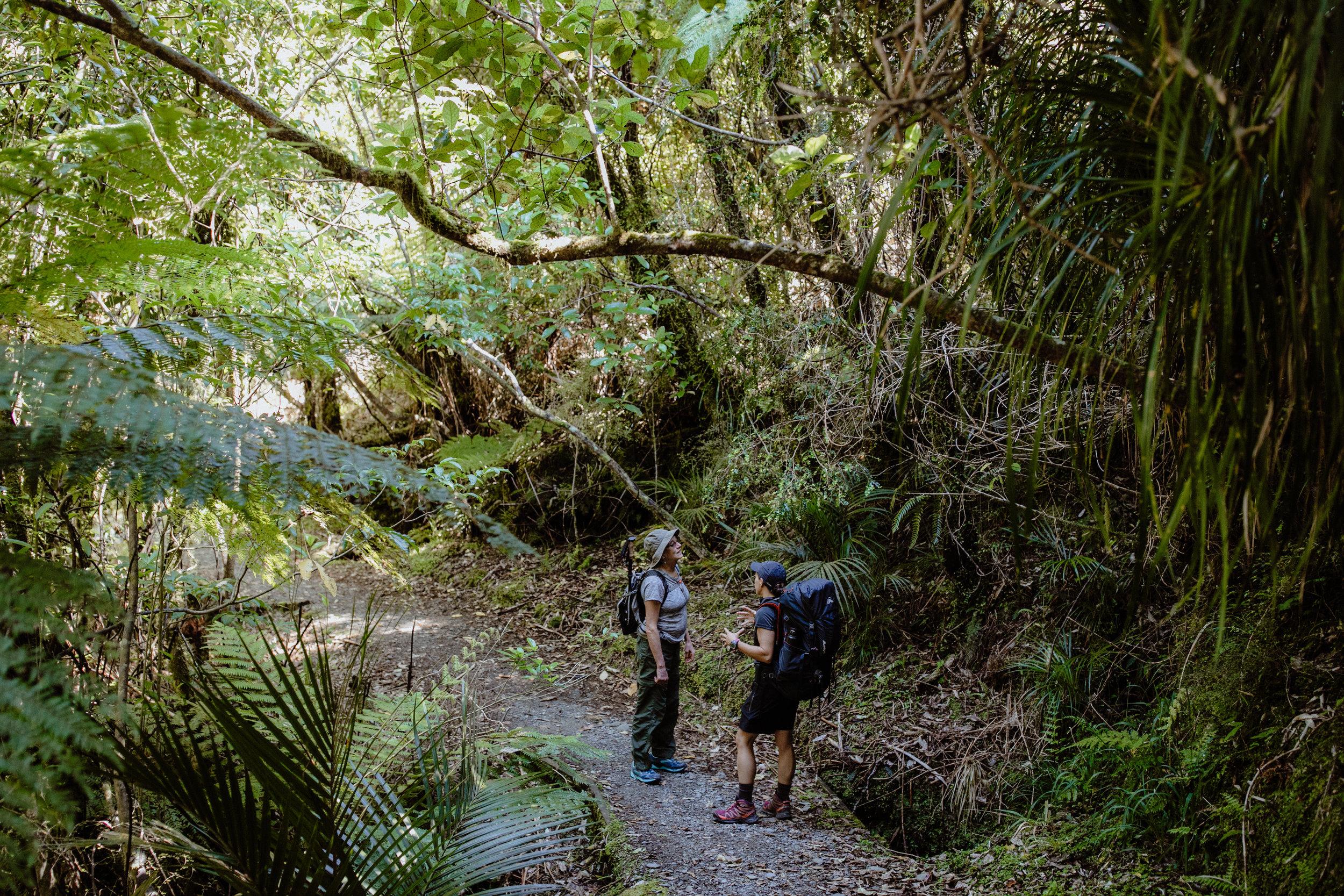 Wellness New Zealand-150.jpg