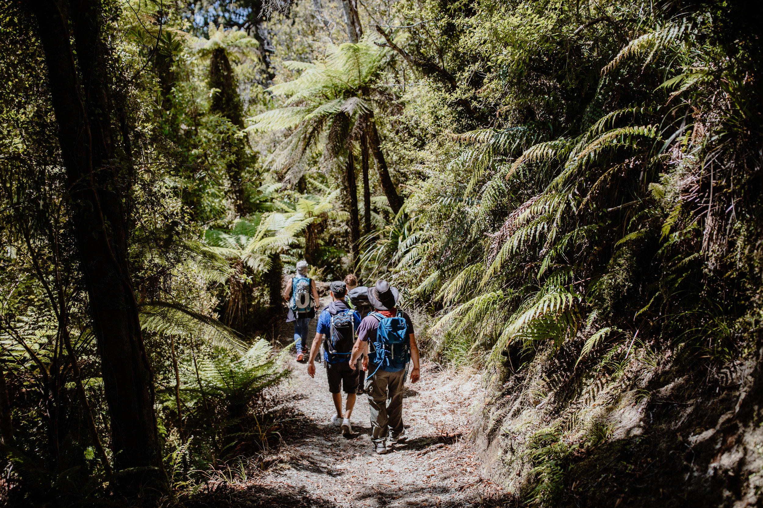 Wellness New Zealand-155.jpg