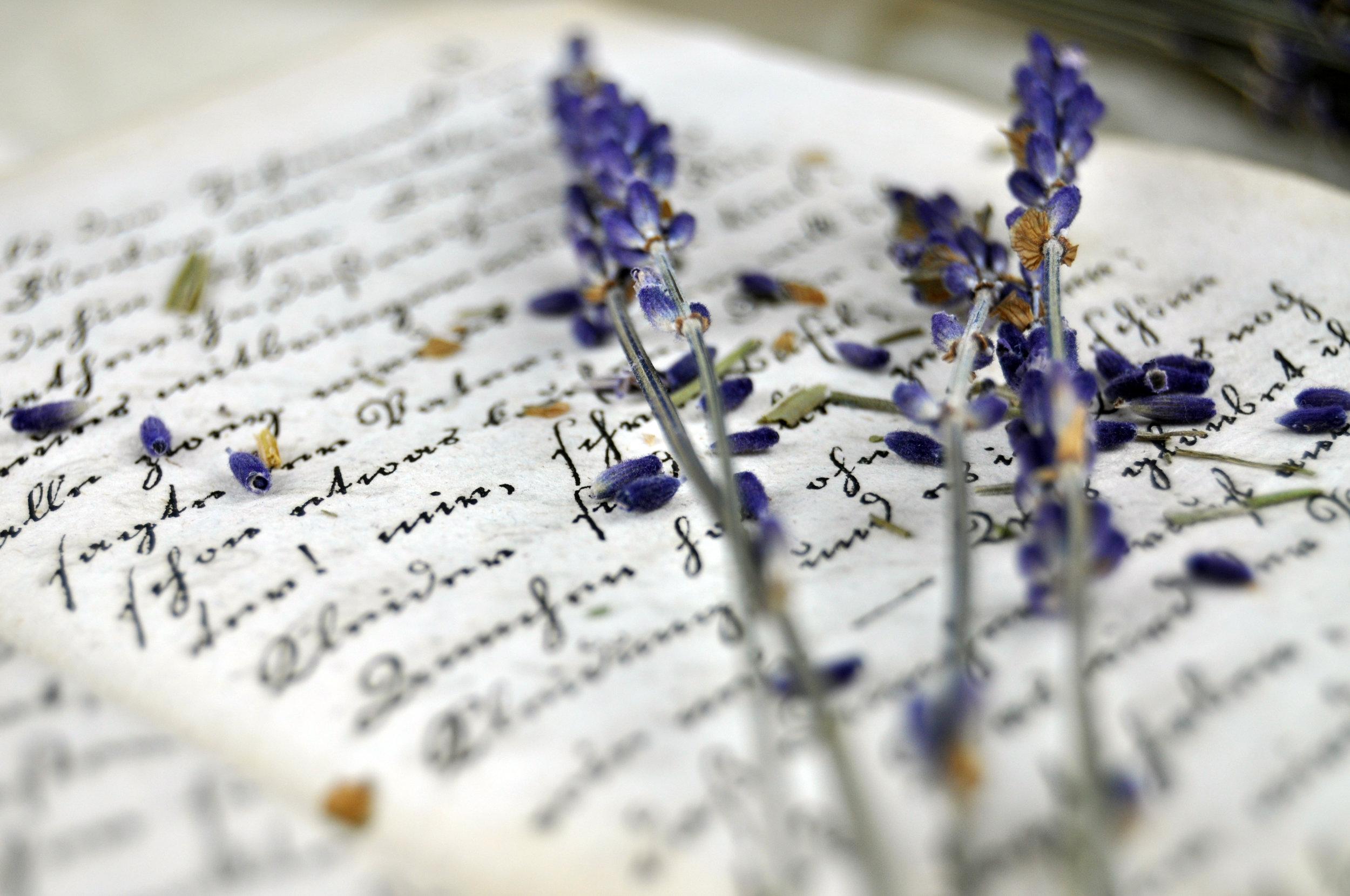 lavender book.jpeg