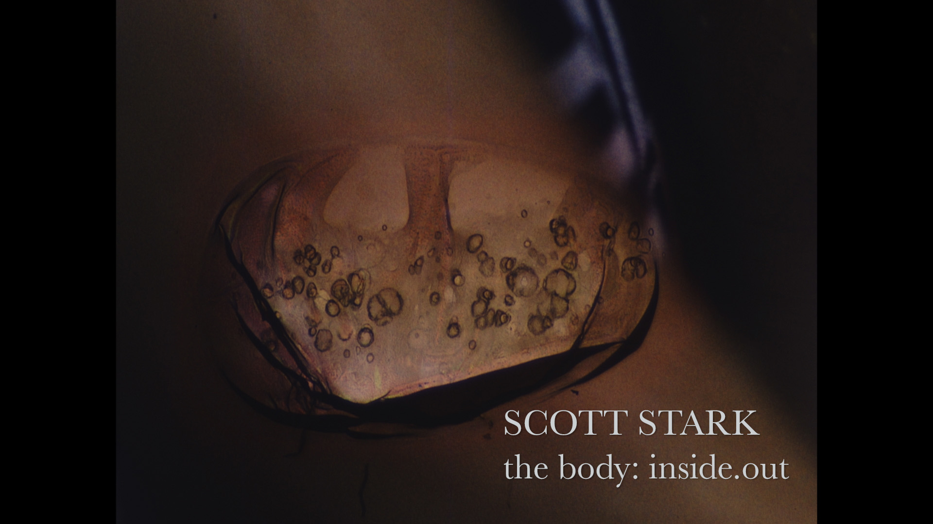 Scott Stark the body: inside.out poster