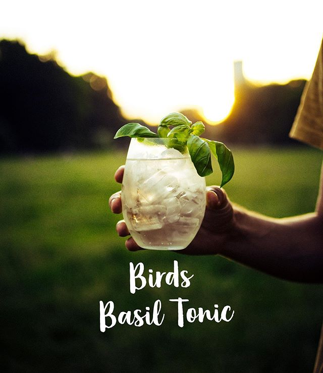Enjoy the perfect sundowner ☀️ with our new summery BIRDS Dry Gin: Drink our BIRDS BASIL TONIC 🌿 and support our current social project in India! 🤗🙏🍹#wearebirds #birdsdrygin #birdsbasiltonic _ BIRDS BASIL TONIC - 50 ml Birds Dry Gin - 150 ml Mild Tonic Water - Basil 🌿 as garnish