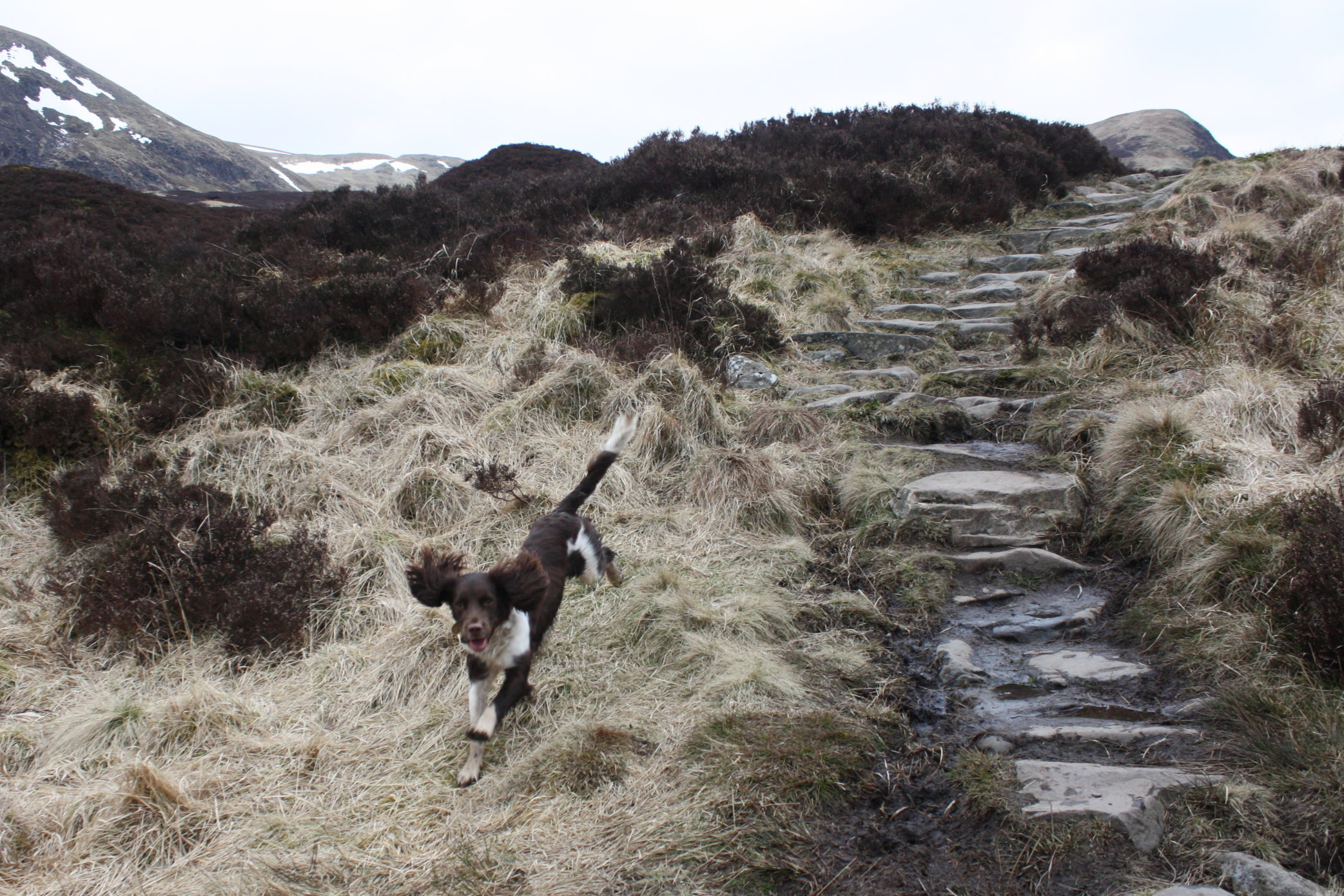 Dog friendly - Blackaddie is one of the most dog friendly hotels in Dumfries & Galloway. With such stunning walking routes on our doorstep, we couldn't expect you to leave your four legged friends at home!
