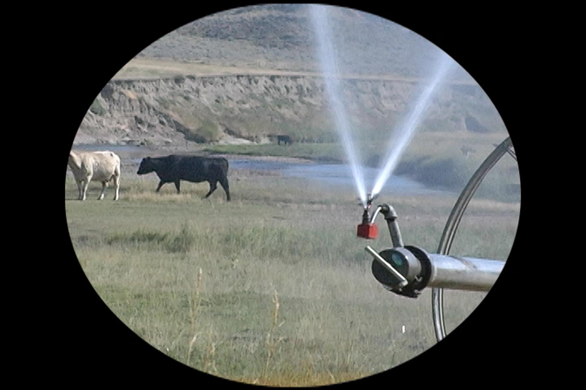 3j_Wyo-cows-spiket-July-20-center-track-QT.00_09_46_19.Still004.jpg