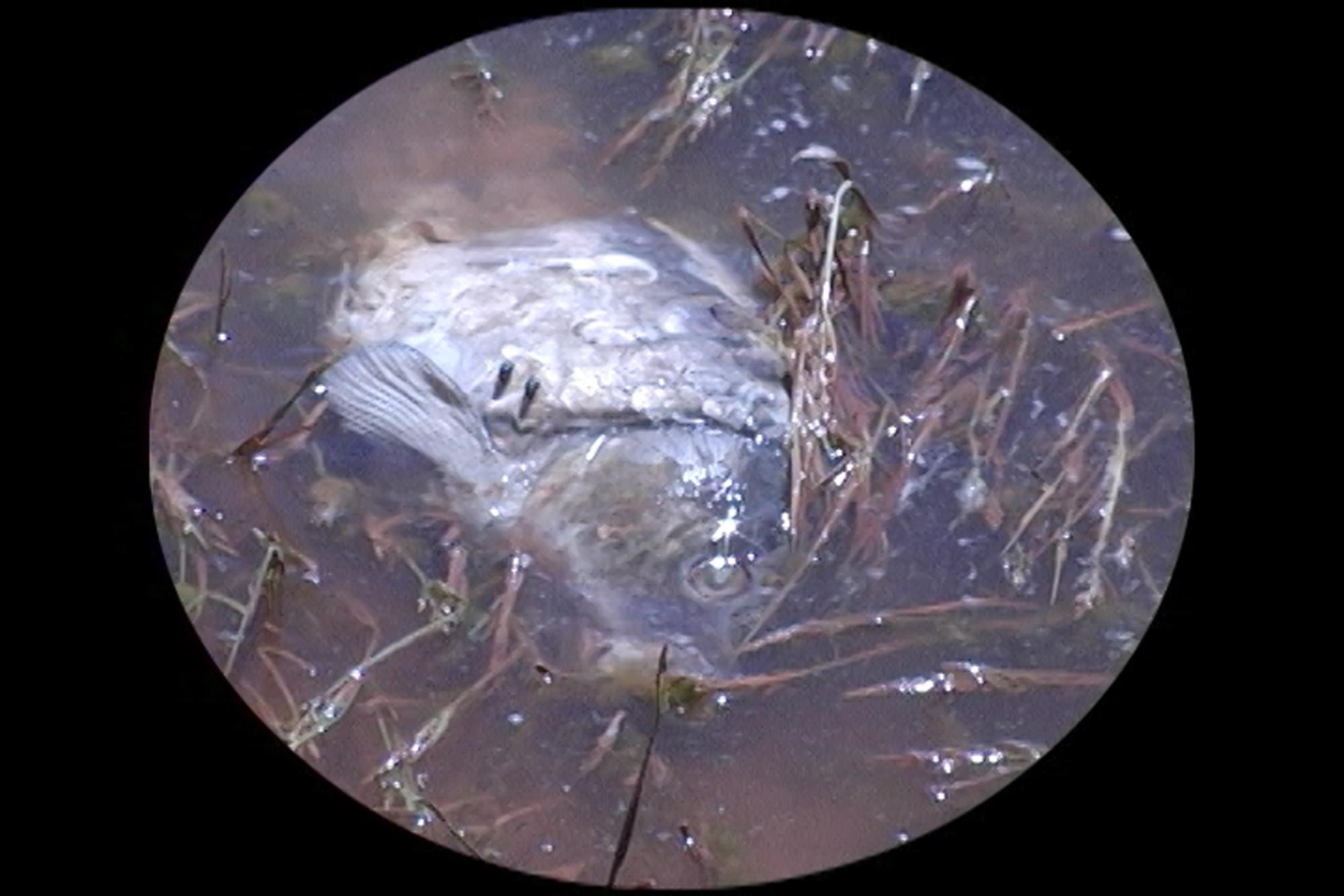 4j_Wyo-dead-fish-July-20-center-track-QT.00_12_10_28.Still012.jpg