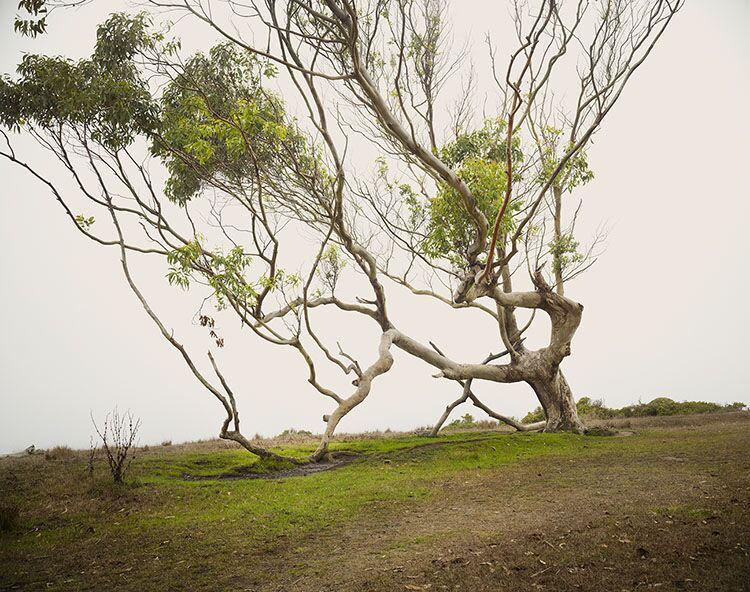 "Markham Johnson, ""Eucalyptus"", size variable to edition, photograph"