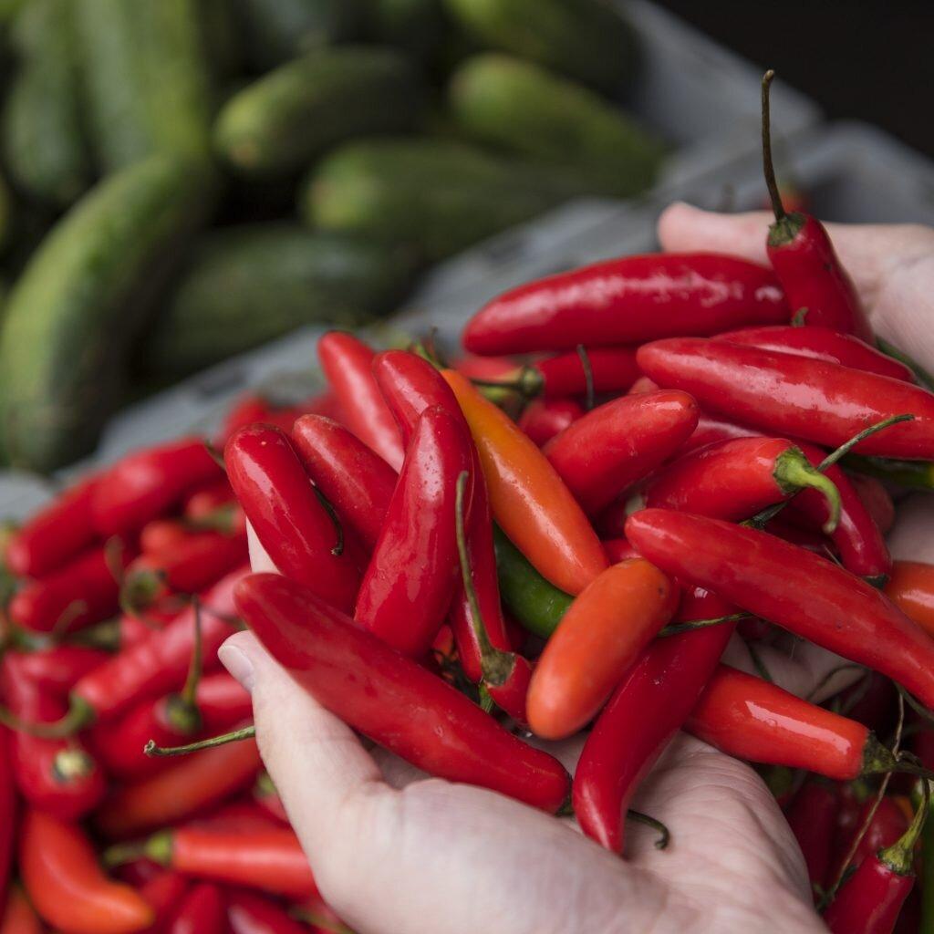 hot-peppers-1024x1024.jpg