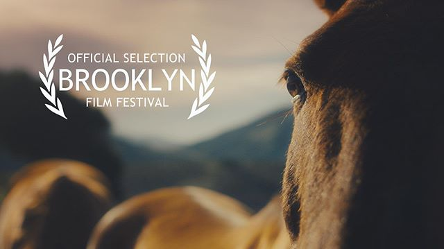 We couldn't be happier that Alpha Mare is making its East Coast premiere at @brooklynfilmfestival! We screen June 1st at @wythehotel and June 8th at @windmillstudiosnyc - see you there! 🐎 Link in bio for tickets.