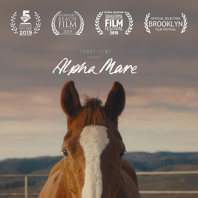 Alpha Mare finally has a poster! Here's half of it 😉 Designed by the inimitable @jesseefish. Come see it in person at @brooklynfilmfestival this weekend! Link for tickets in bio.