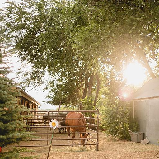 Three-Leaf-Farm-Dinner-Horses.jpg