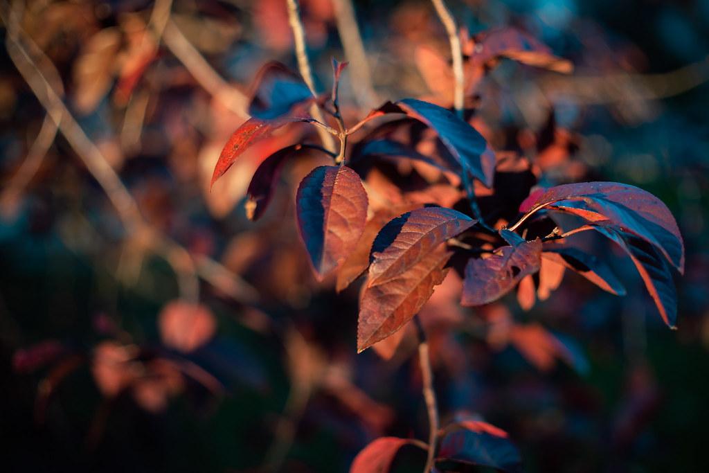 Sony a7RII + Minolta Rokkor-x 50mm f/1.4 @ f/5.6, ISO100, 1/320 sec.