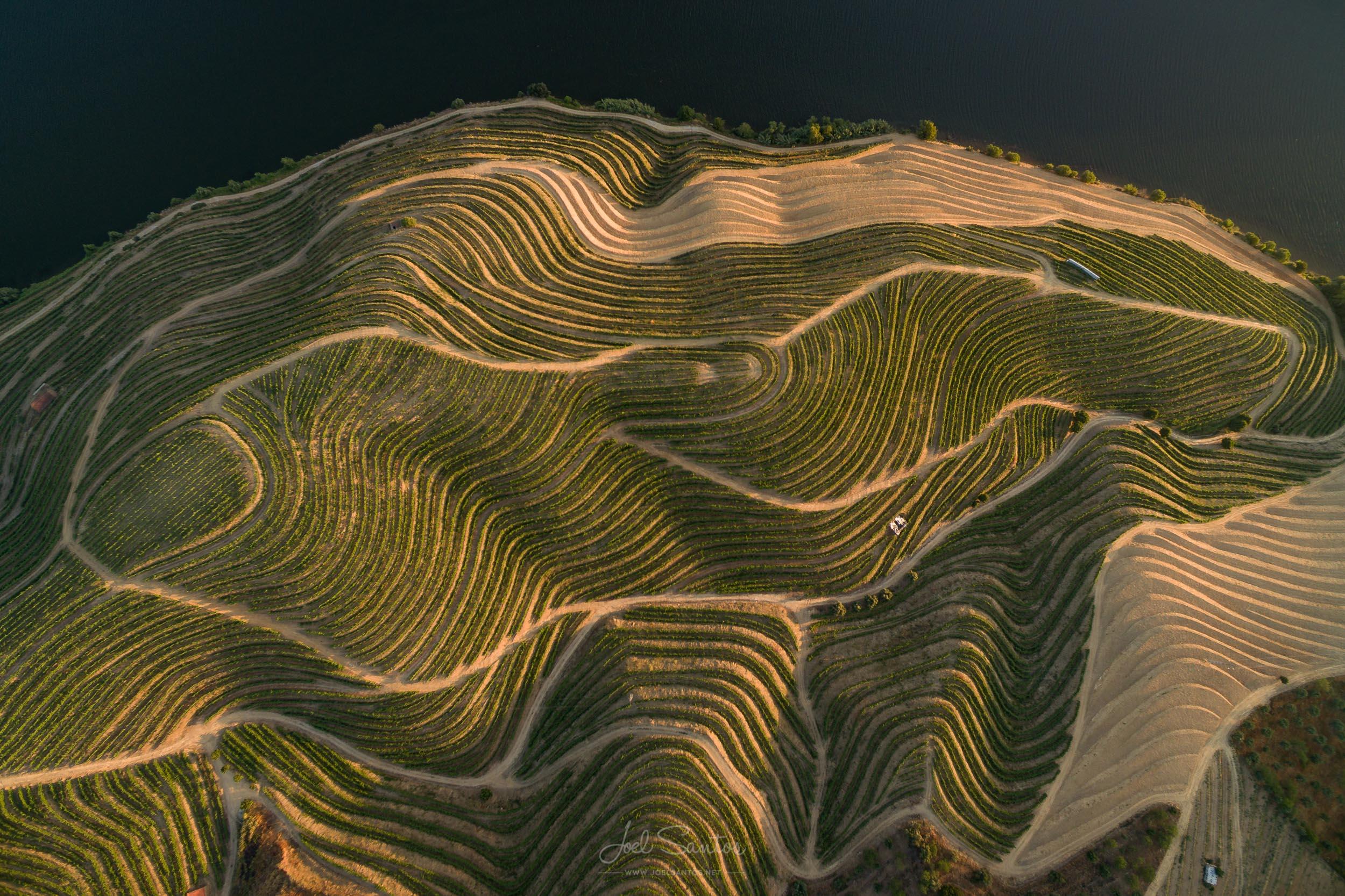 Douro wine plantation, Porto wine, Portugal