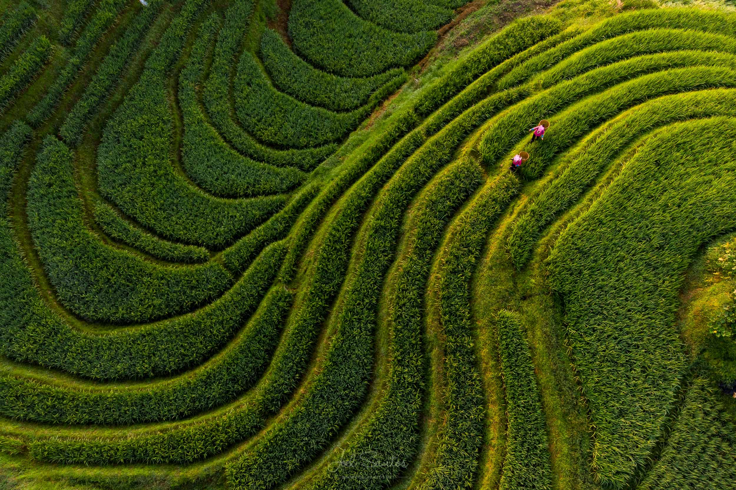 Longsheng rice terraces and farmers, Guangxi Zhuang, China