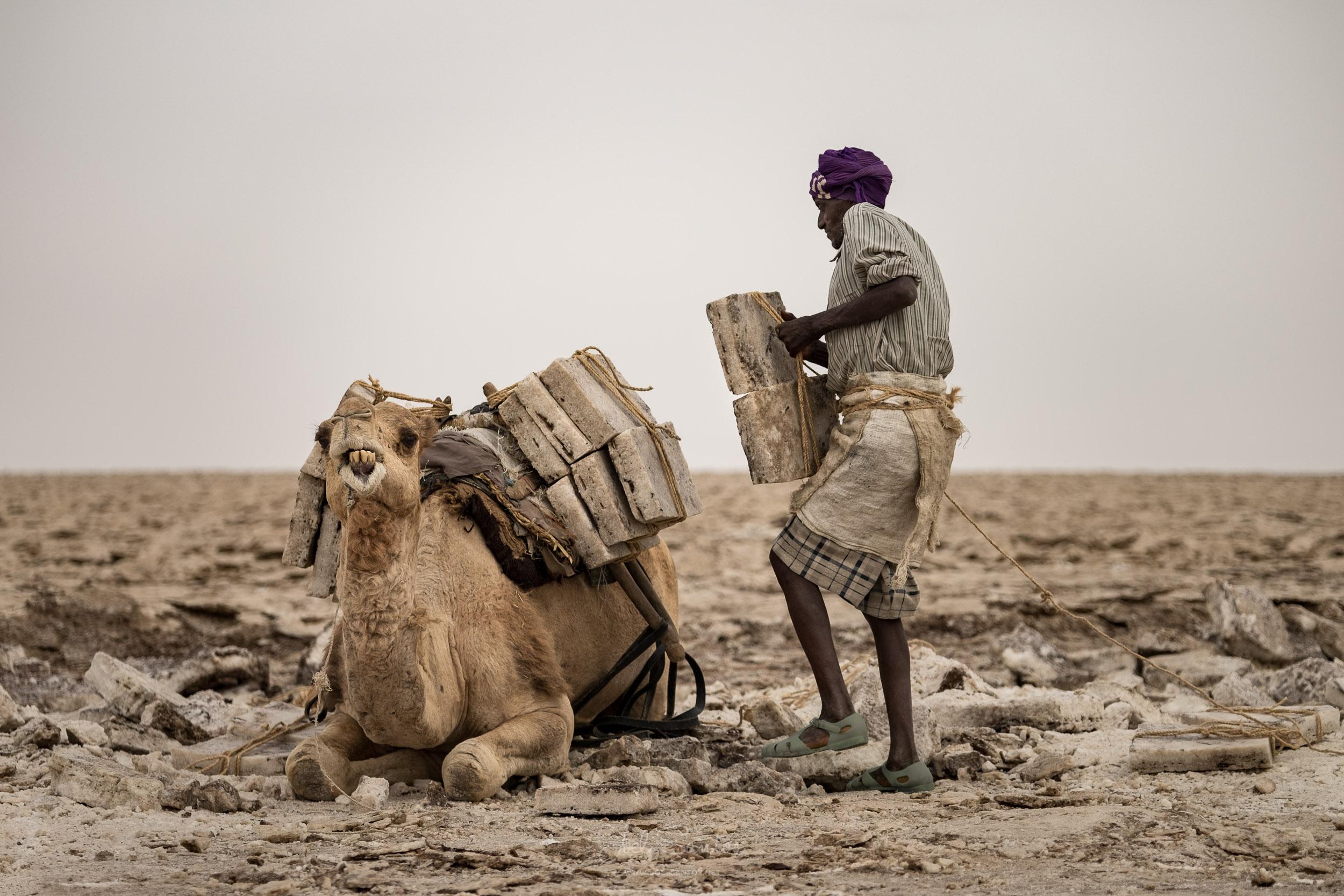 Salt Miner puting the load (salt blocks / tiles) on a dromedary,