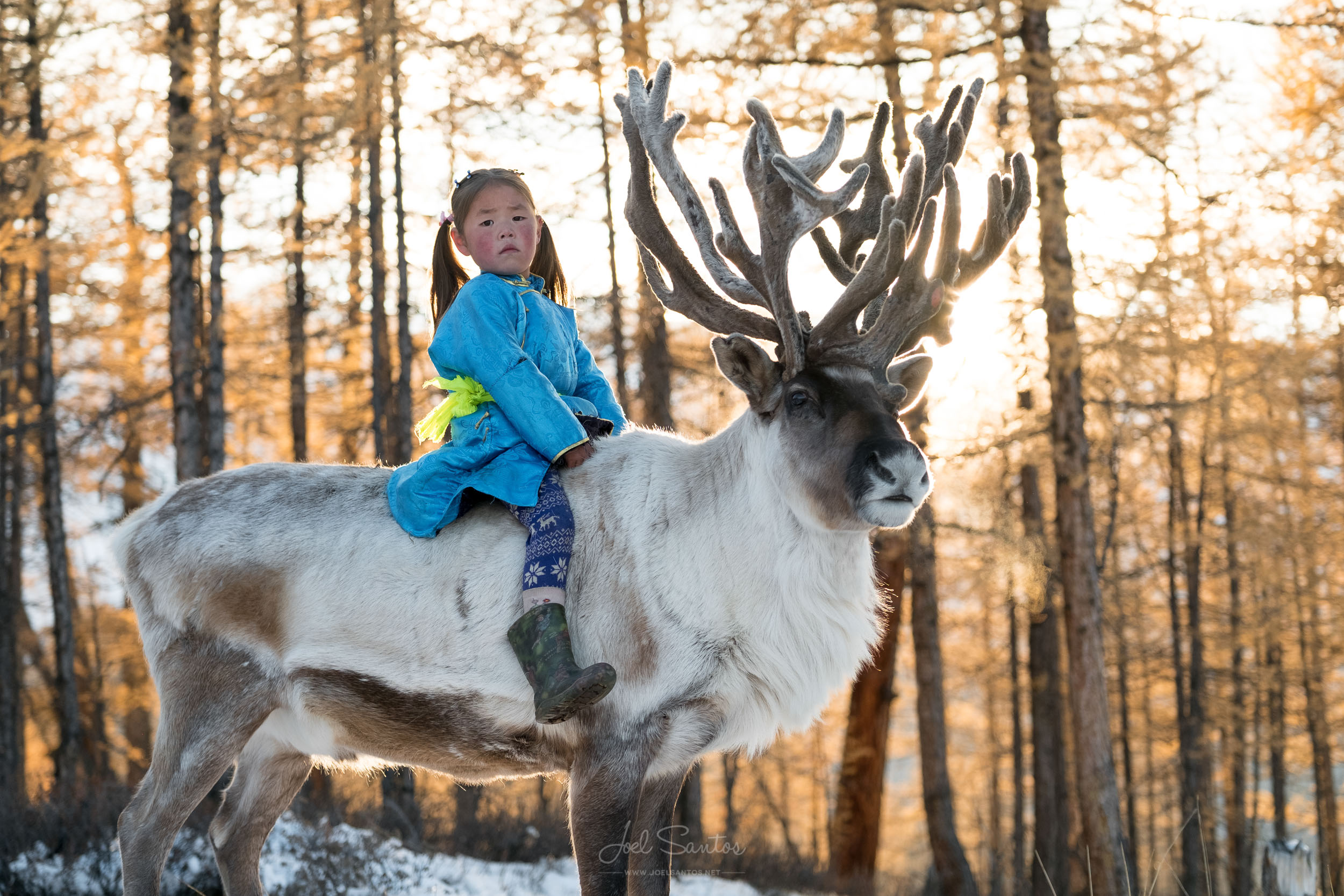 One of the youngest members of the family, Uchraa is already well trained in riding the family reindeer. From the age of two, Tsaatan reindeer are trained to carry children and at three they are able to carry adults.