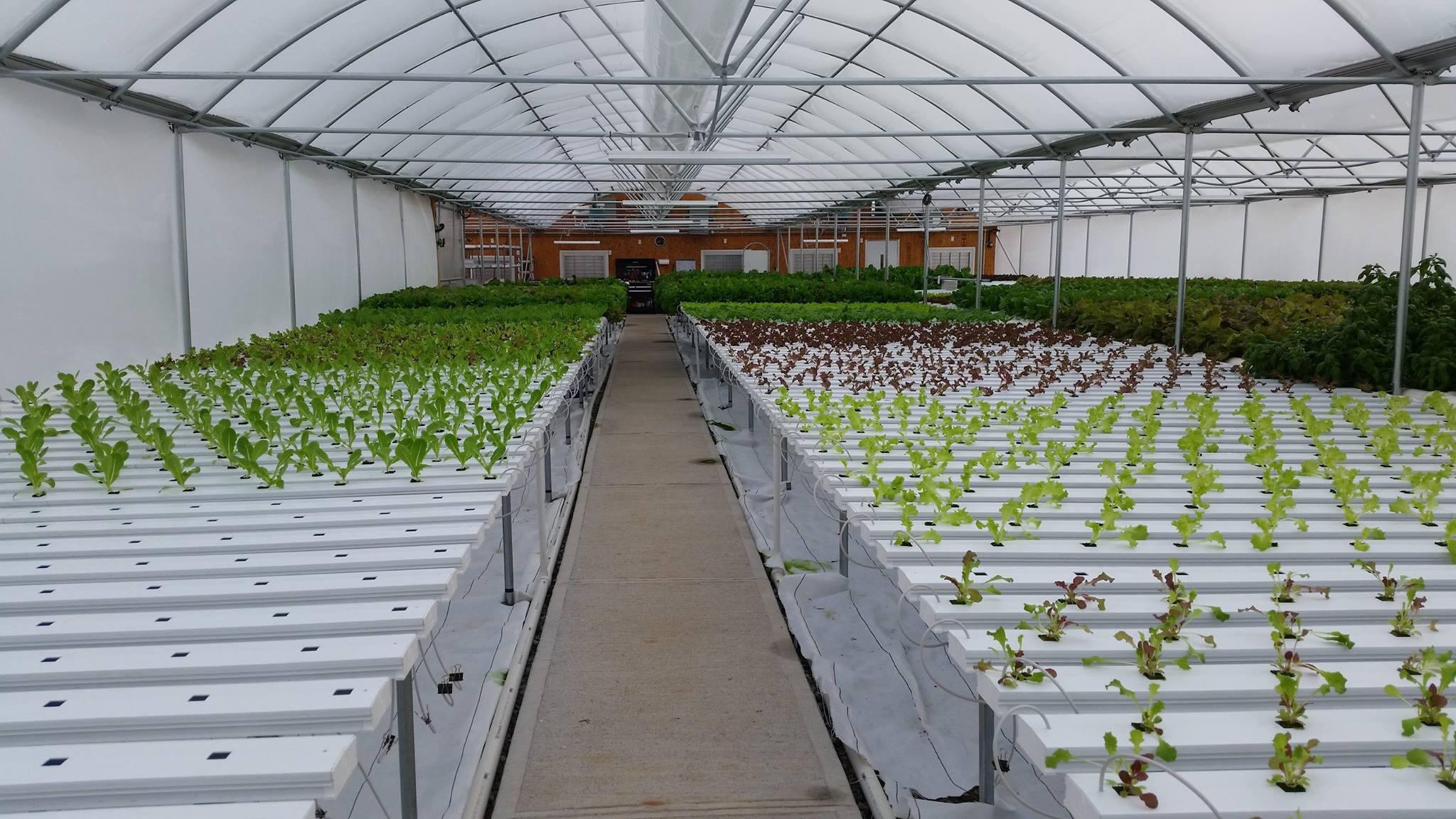 greenhousegrowing.jpg