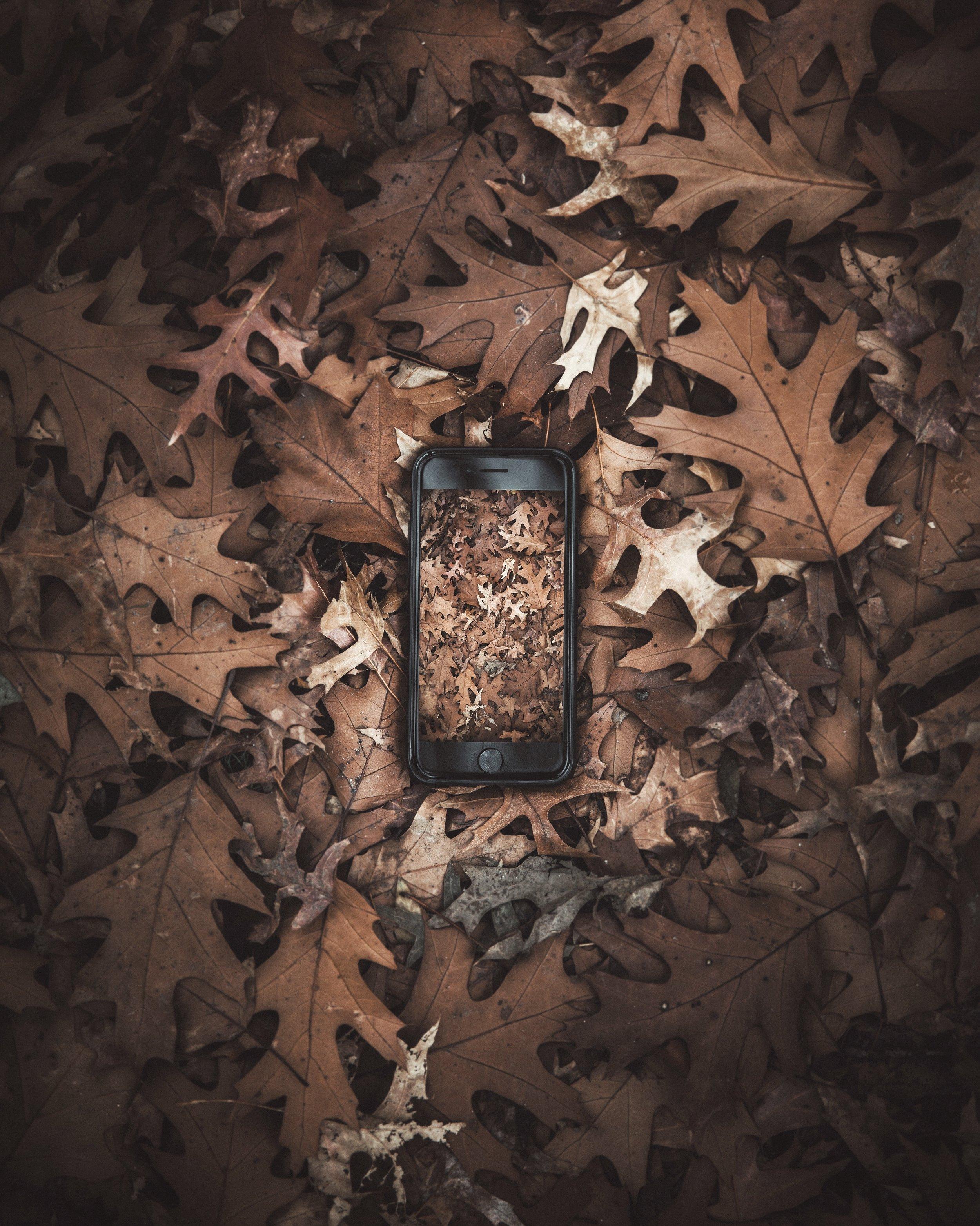 Tech Meets Nature