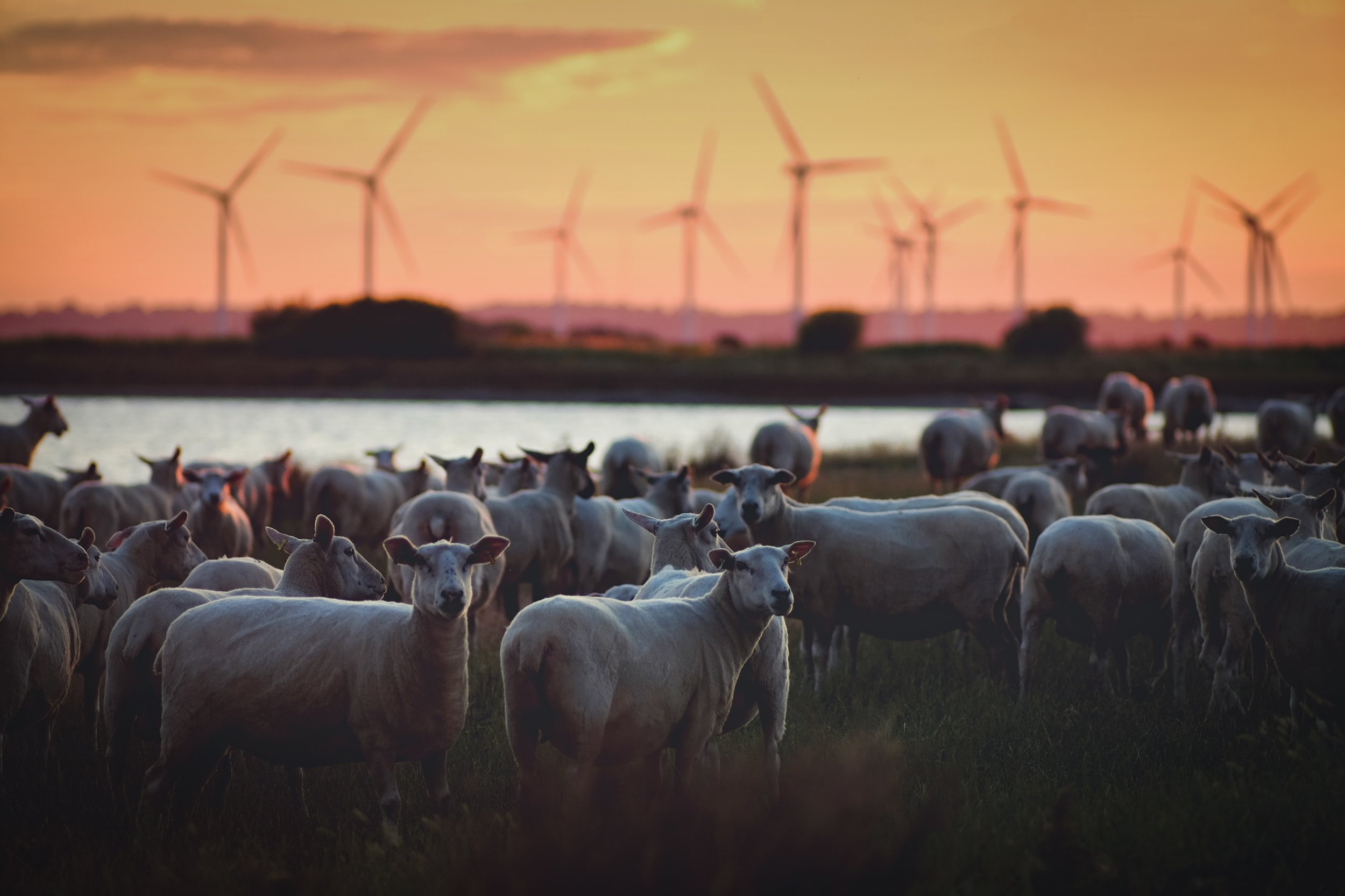 Germany can power their country for a year solely from renewable energy sources.
