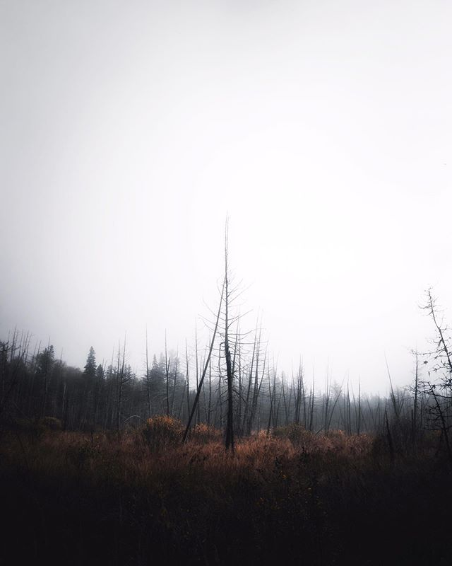 """Old Pine"" by Ben Howard plays* ⠀⠀⠀⠀⠀⠀⠀⠀⠀ What other song would fit this mood? • • • • • • • #pnwonderland #pnwparadise #pnwphotography #pnwlife #pnwvibes #neverstopexploring #stayandwander #roamtheplanet #moodygrams #mtnfolk #awakethesoul #wanderlust #artofvisuals #keepitwild #optoutside #pnwcollective #ourplanetdaily #discoveron #opticmadness #folknature #pnw #pnwmoods #theimaged #earthfocus #earthpix #spookyseason #agameoftones #autumn #folkscenery #visualambassadors"