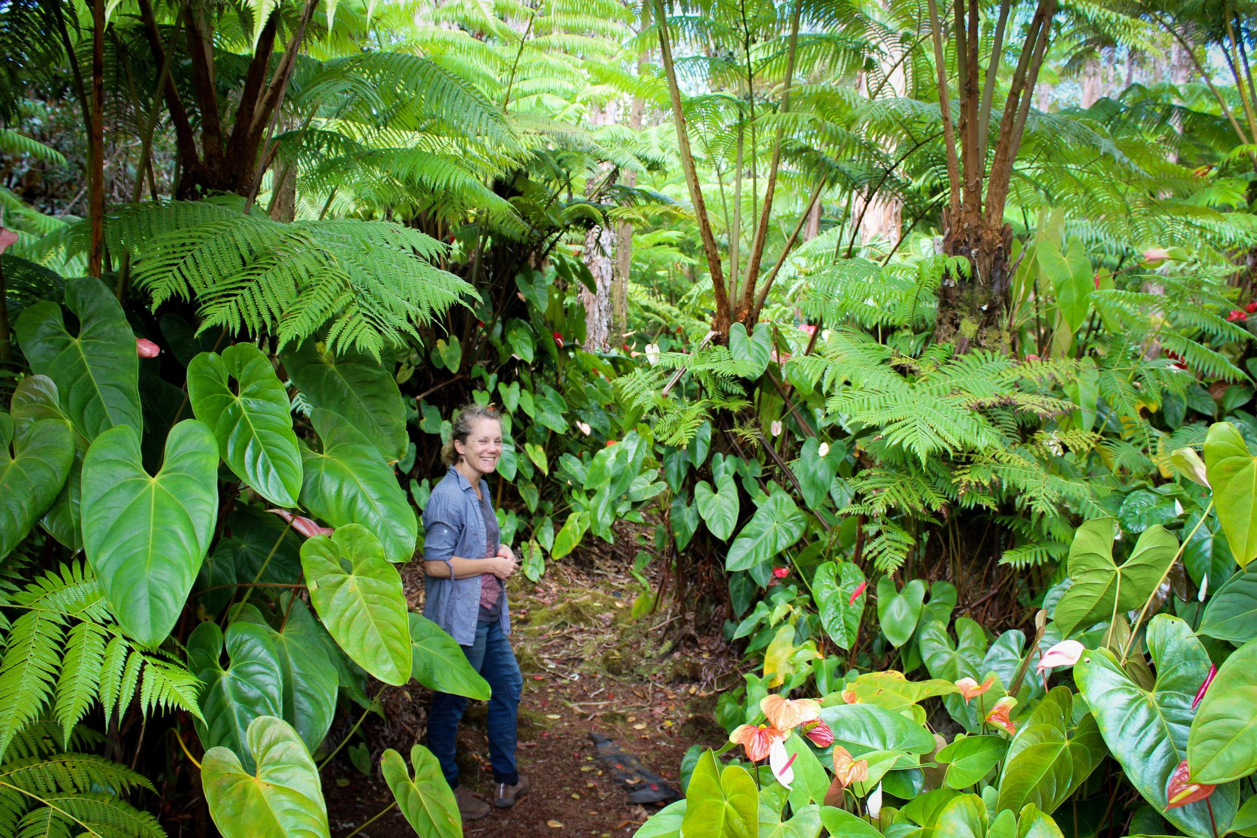 anthurium-forest.jpg