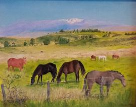 Polo Ponies with Mauna Kea