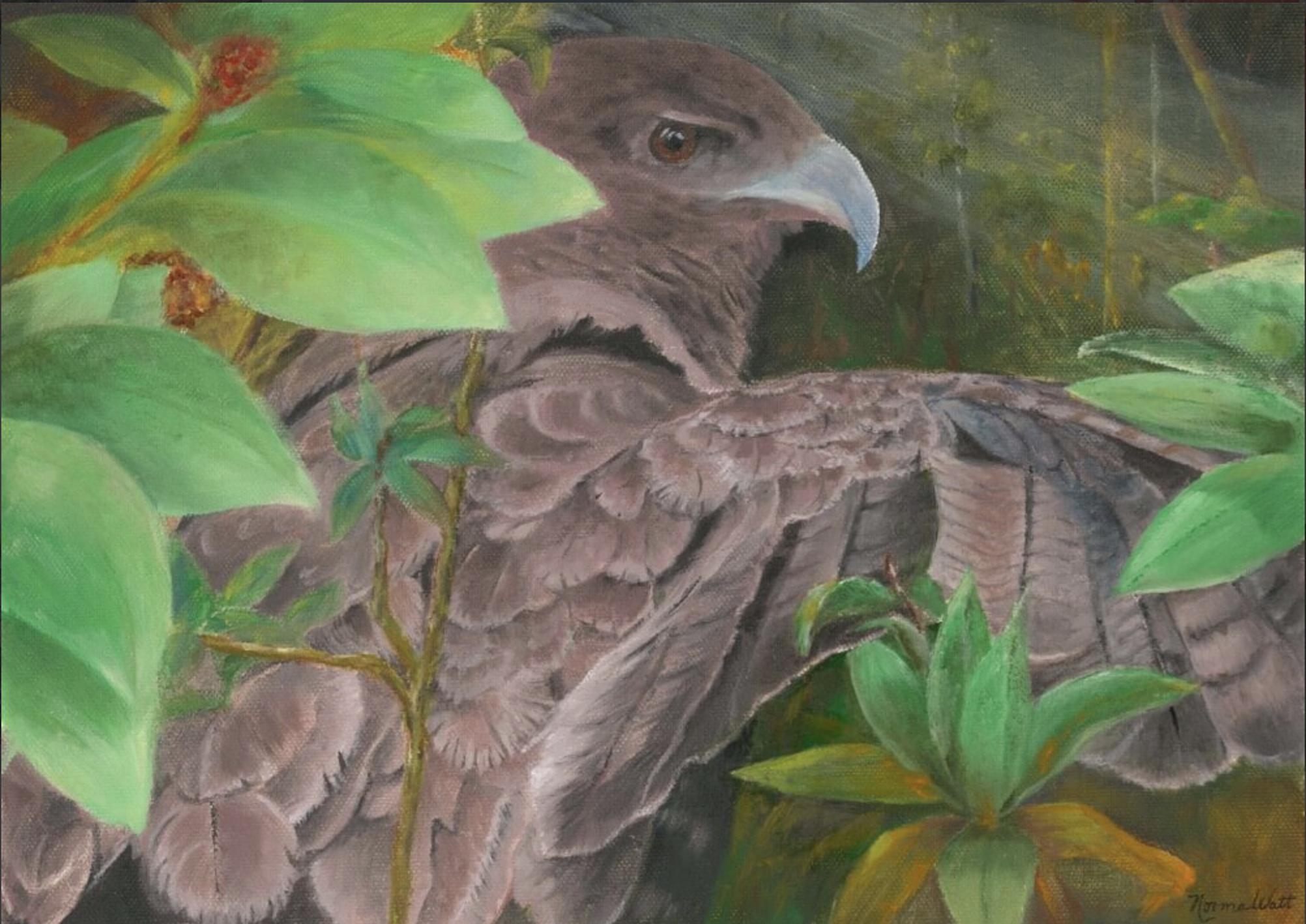 `Io Endangered Hawaiian Hawk