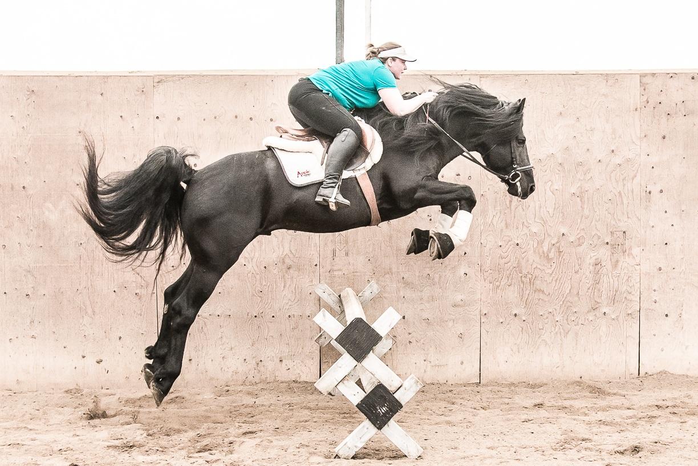 Web+pick+Boucher+Yugo+-+HUGO-37%5B65250%5D+Deborah+Wilson+photo+-+Rosemarie+Huxted+rider.jpg