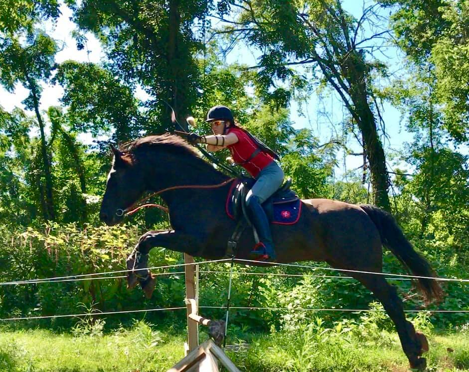 """Saguenay Eve Yukon Jospatriote aka """"Patriote"""".  Owned, trained and ridden by Kimberley Beldam. Patriote is a highly accomplished Dressage (Prix St. George), Mounted Archery and Eventing competitor."""