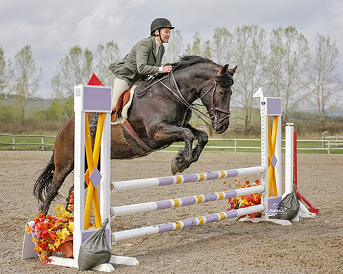 Du Coteau Dynamo Laurie  competing in show jumping. Laurie won 1st place at the Rocky Mountain Show Jumping .75 Division and placed 2nd in Eventing at Eversfield ODE (.70). Owned and Ridden by Holly Milne. Photo: Amanda Ubell Photography